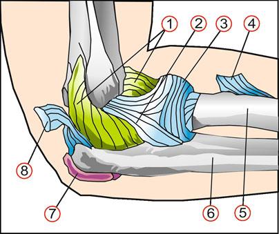 Как укрепить связки локтевой сустав нестабильность плечевого сустава по мкб 10